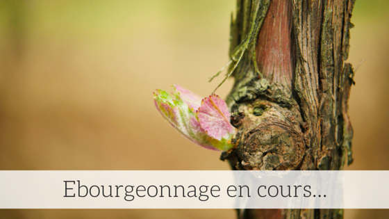 Ebourgeonnage en cours